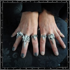 Bird skull rings selection